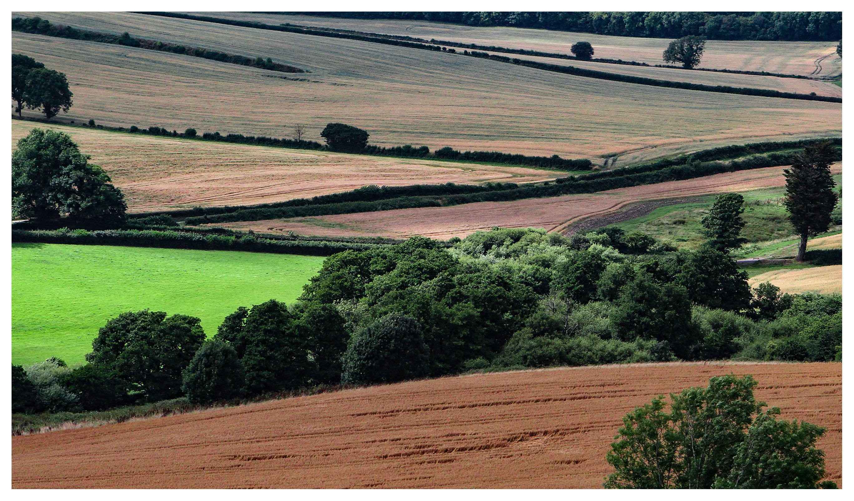 Summer in Dorset: Fieds at Cerne Abbas, village of the Cerne Abbas Giant