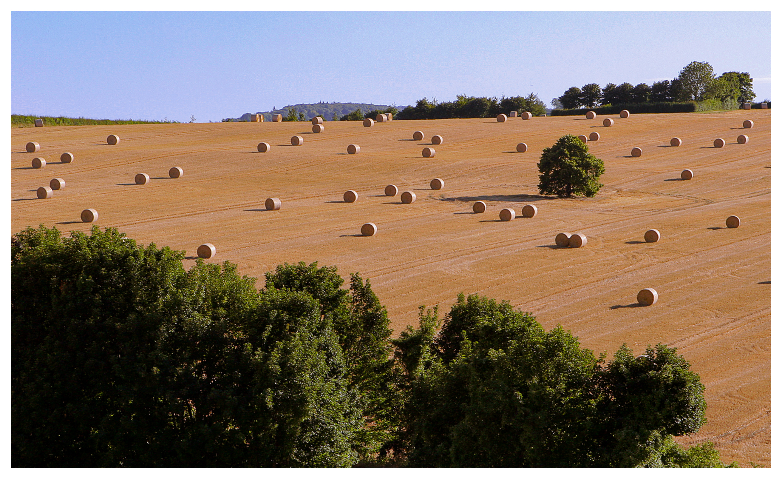 Bales of threshed hay across a field in Kent, England
